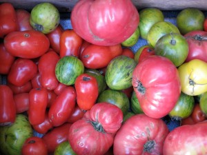 Billy's Tomatoes